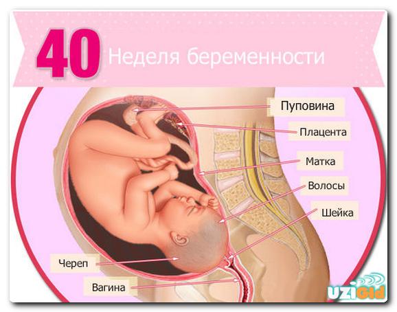 Роды на 40 неделе беременности