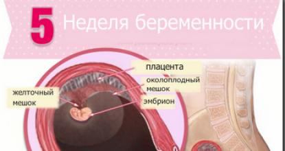 УЗИ на 5-й неделе во время беременности
