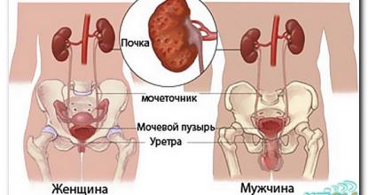 Показания и подготовка к УЗИ мочевого пузыря и почек