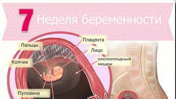 узи на 7 неделе беременности