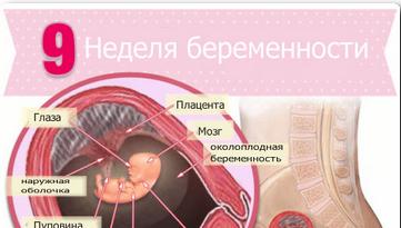 узи на 9 неделе беременности