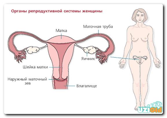 узи матки на какой день цикла делать