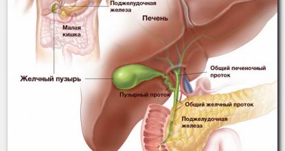 Что такое УЗИ гепатобилиарной системы и как к нему подготовиться